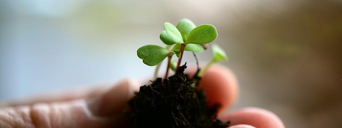 Plant 4036191 1920